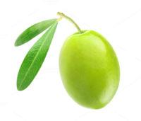 Société Olives du Sud