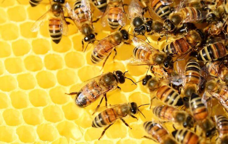 abeilles-ecosyteme-danger